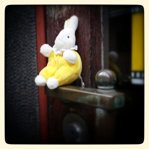 A random rabbit found in a shop doorway on Midsummer's Eve