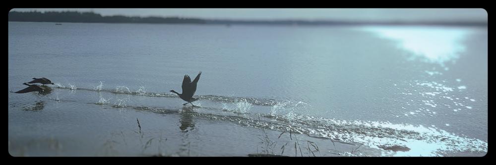 geese_Fotor