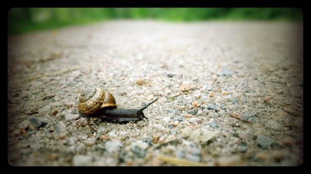 Snail's pace.jpg