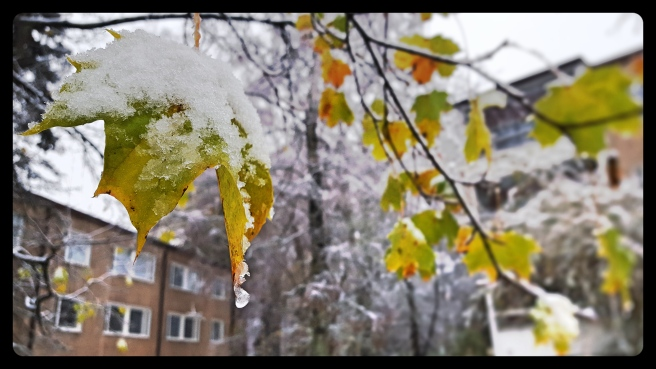 As autumn clings, winter begins