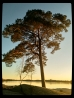 Tree & Water